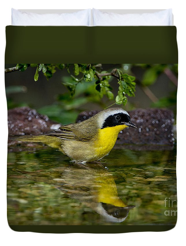Common Yellowthroat Duvet Cover featuring the photograph Common Yellowthroat by Anthony Mercieca