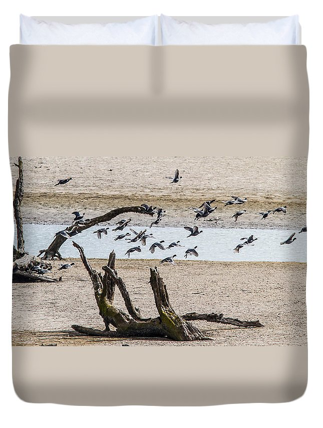 Ducks Duvet Cover featuring the photograph Coots-mud Hens by Brian Williamson