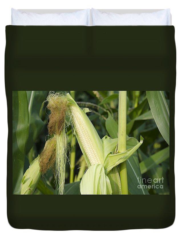 Corn Field Duvet Cover featuring the photograph Corn by Mats Silvan