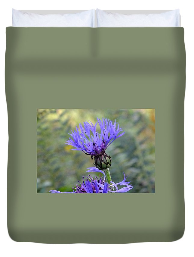 Nature Duvet Cover featuring the photograph Cornflower by Peggy King