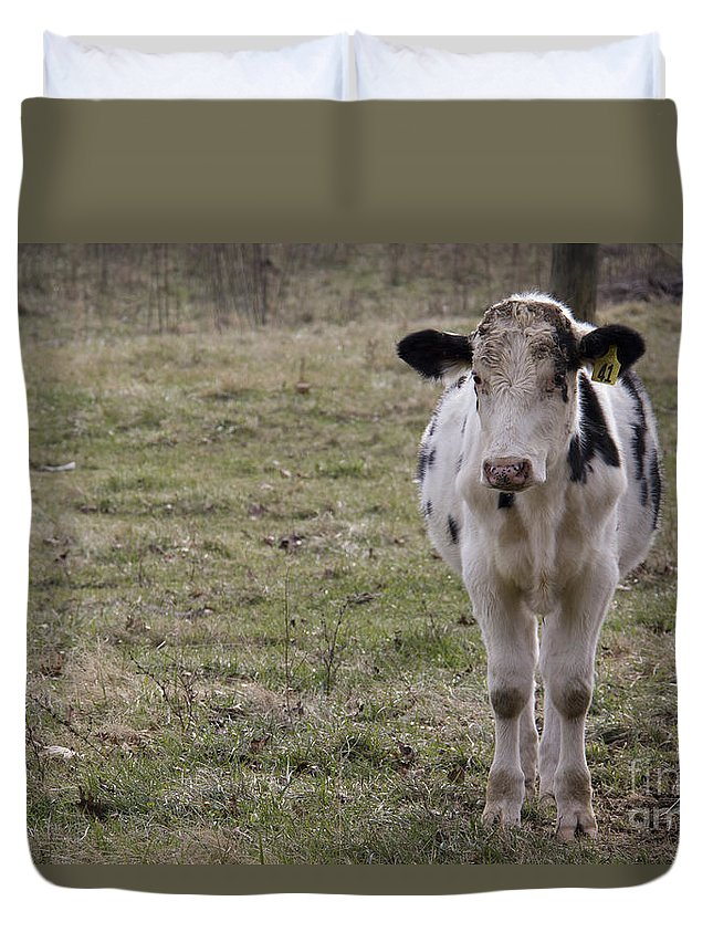 Cow Duvet Cover featuring the photograph Daisy by Teresa Mucha