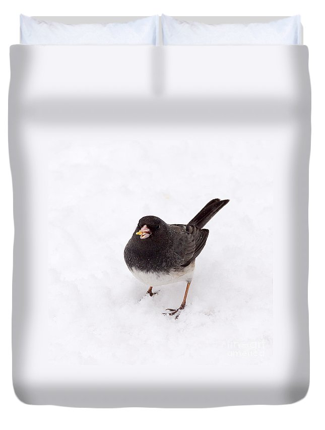 Dark Eyed Juncos Duvet Cover featuring the photograph Dark Eyed Junco by Lori Tordsen