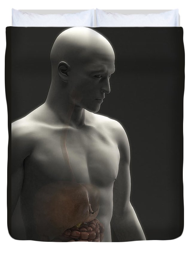 Internal Organs Duvet Cover featuring the photograph Digestive System Male by Science Picture Co