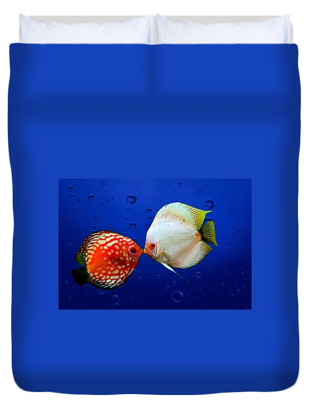 Fish Duvet Cover featuring the photograph Discus Fish by Heike Hultsch