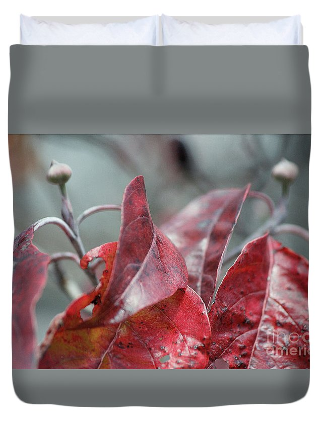 Dogwood Autumn Duvet Cover featuring the photograph Dogwood Autumn by Luv Photography