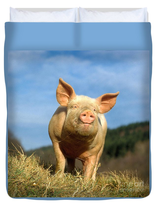 Pig Duvet Cover featuring the photograph Domestic Pig by Hans Reinhard