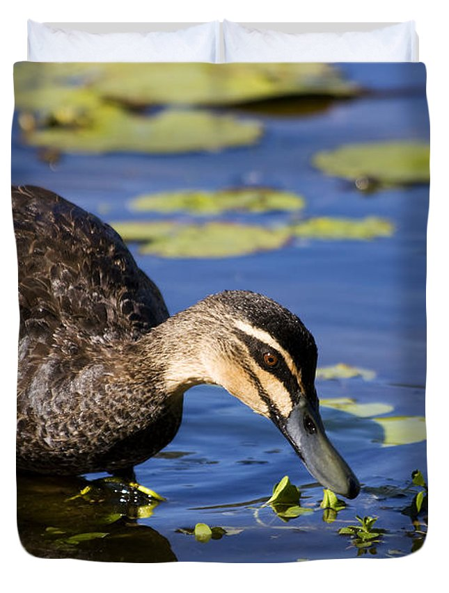 Anas Duvet Cover featuring the photograph Duck Hunt by Jorgo Photography - Wall Art Gallery
