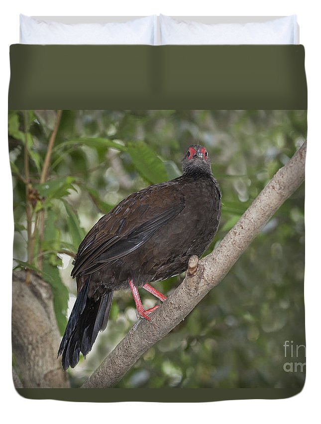 Edward's Pheasant Duvet Cover featuring the photograph Edwards Pheasant by Anthony Mercieca