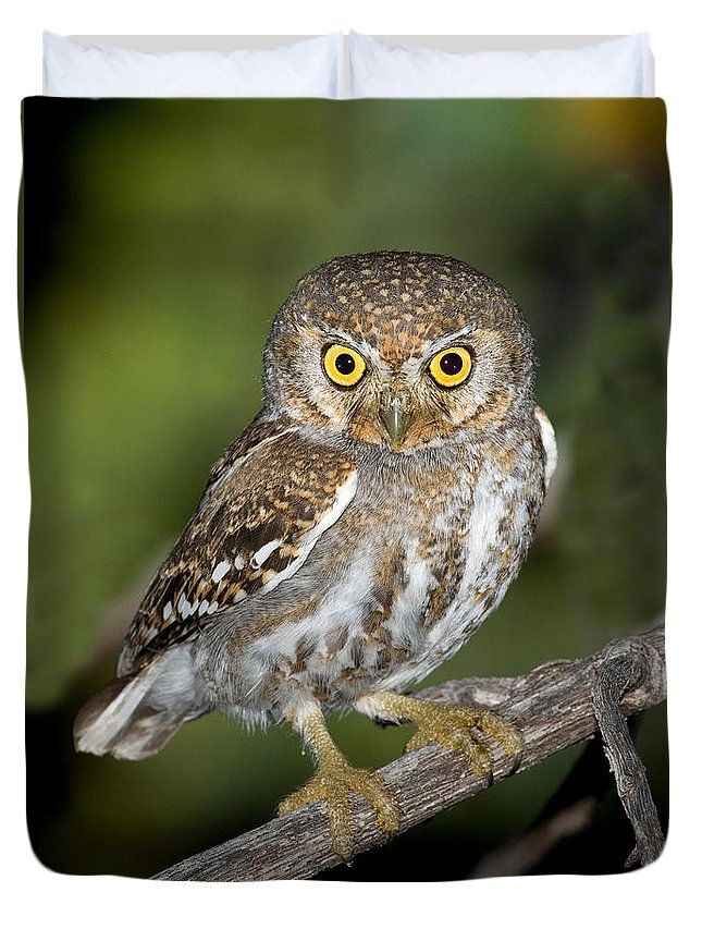 Animal Duvet Cover featuring the photograph Elf Owl by Anthony Mercieca