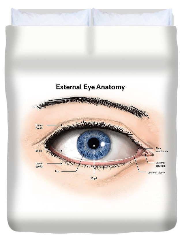 External Anatomy Of The Human Eye Duvet Cover for Sale by Alan Gesek