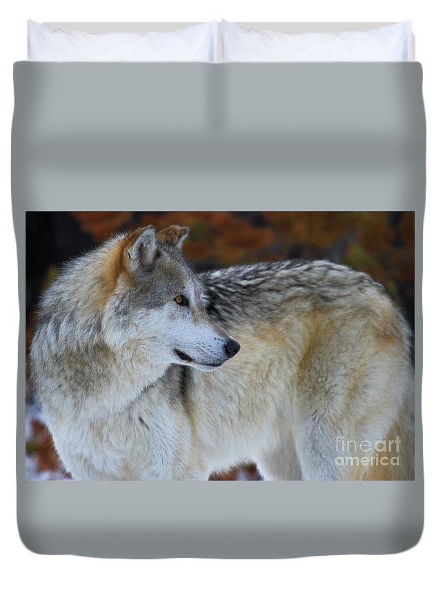 Alpha Wolf Duvet Cover featuring the photograph Fall Colors by Adam Jewell