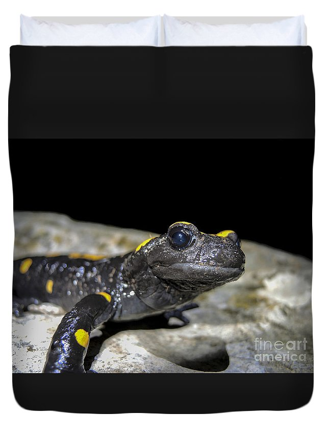 Fire Salamander Duvet Cover featuring the photograph Fire Salamander Salamandra Salamandra by Shay Levy