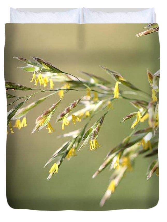 Mccombie Duvet Cover featuring the photograph Flowering Brome Grass by J McCombie