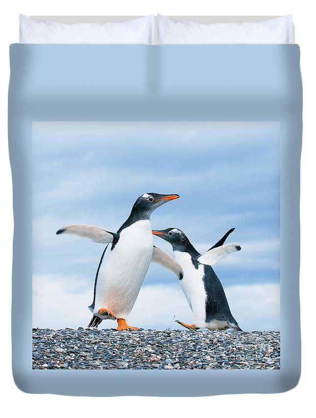 Penguin Duvet Covers