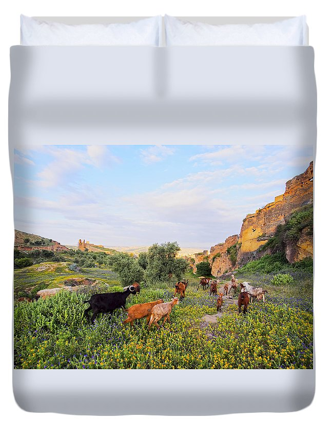 Africa Duvet Cover featuring the photograph Goats In Fes In Morocco by Karol Kozlowski