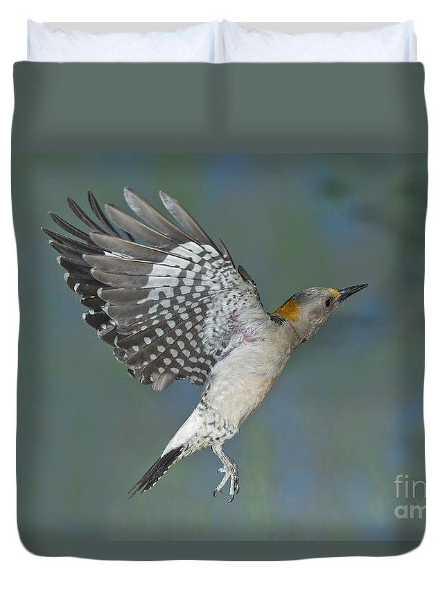 Golden-fronted Woodpecker Duvet Cover featuring the photograph Golden-fronted Woodpecker by Anthony Mercieca
