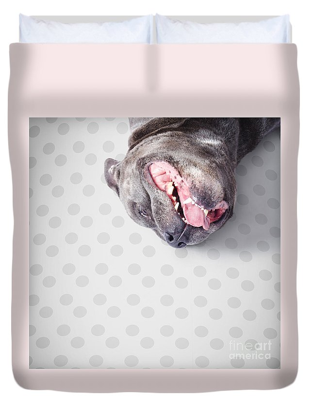 Animal Duvet Cover featuring the photograph Goofy Blue Staffie Lying On His Back by Jorgo Photography - Wall Art Gallery