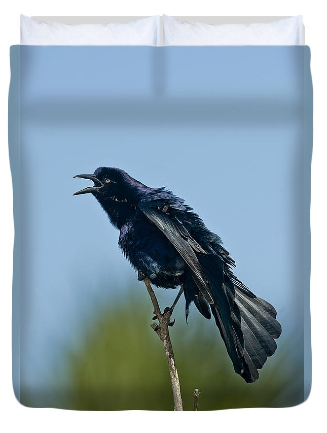 Great-tailed Grackle Duvet Cover featuring the photograph Great-tailed Grackle by Anthony Mercieca