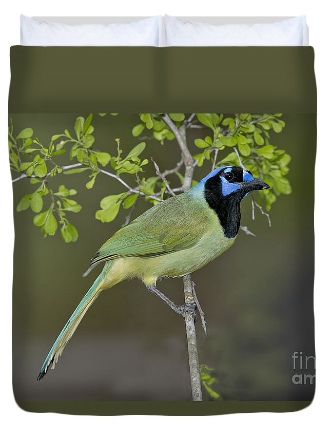 Green Jay Duvet Cover featuring the photograph Green Jay by Anthony Mercieca