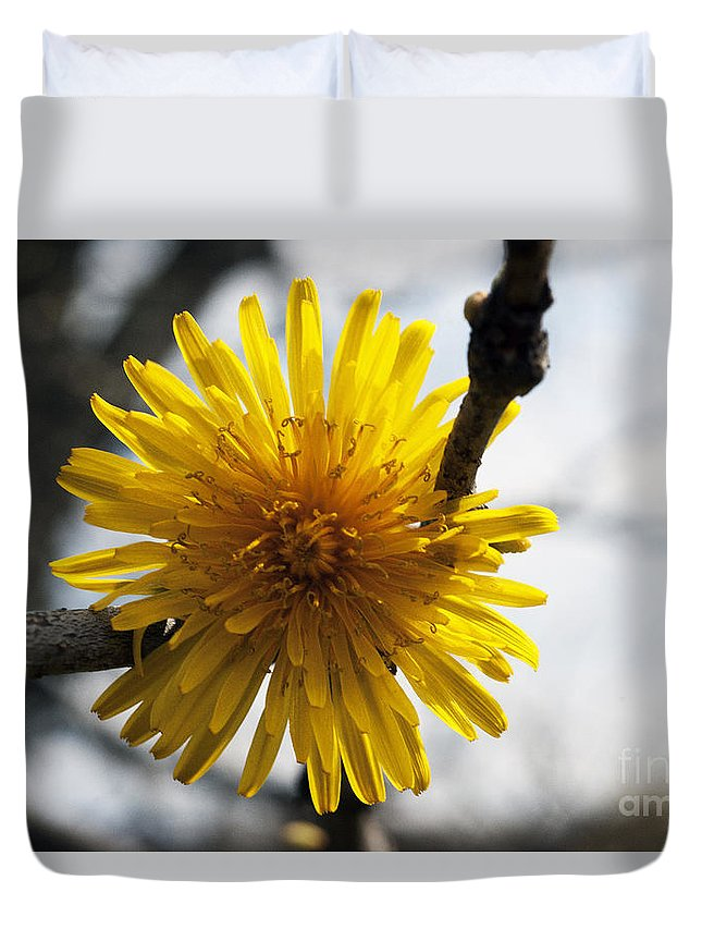Crystal Harman Duvet Cover featuring the photograph Hanging Around by Crystal Harman