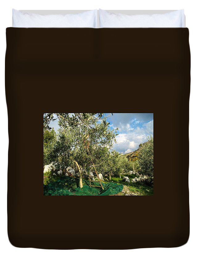 Olive Tree Duvet Cover featuring the photograph Harvest Day by Dany Lison