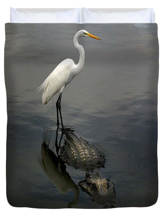 Alligator Duvet Cover featuring the photograph Hitch Hiker by Anthony Jones