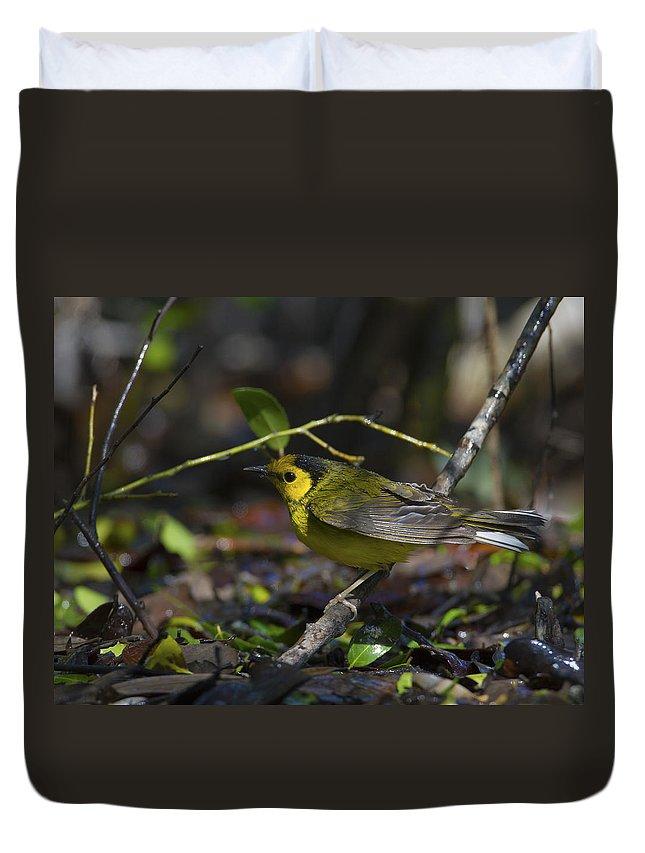 Doug Lloyd Duvet Cover featuring the photograph Hooded Warbler by Doug Lloyd