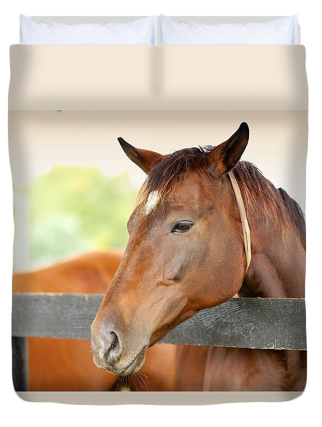 Horse Duvet Cover featuring the photograph Horse On A Farm by Alexey Stiop