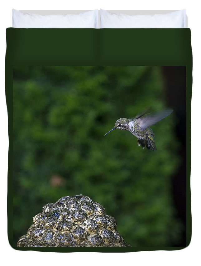Hummingbird Duvet Cover featuring the photograph Humming Bird by Paul Fell
