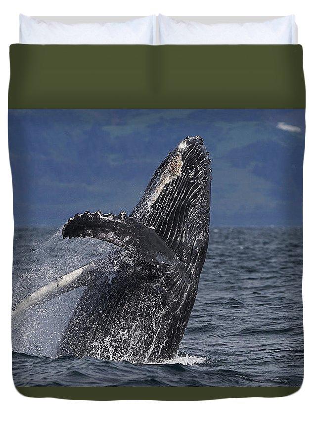 Hiroya Minakuchi Duvet Cover featuring the photograph Humpback Whale Breaching Prince William by Hiroya Minakuchi