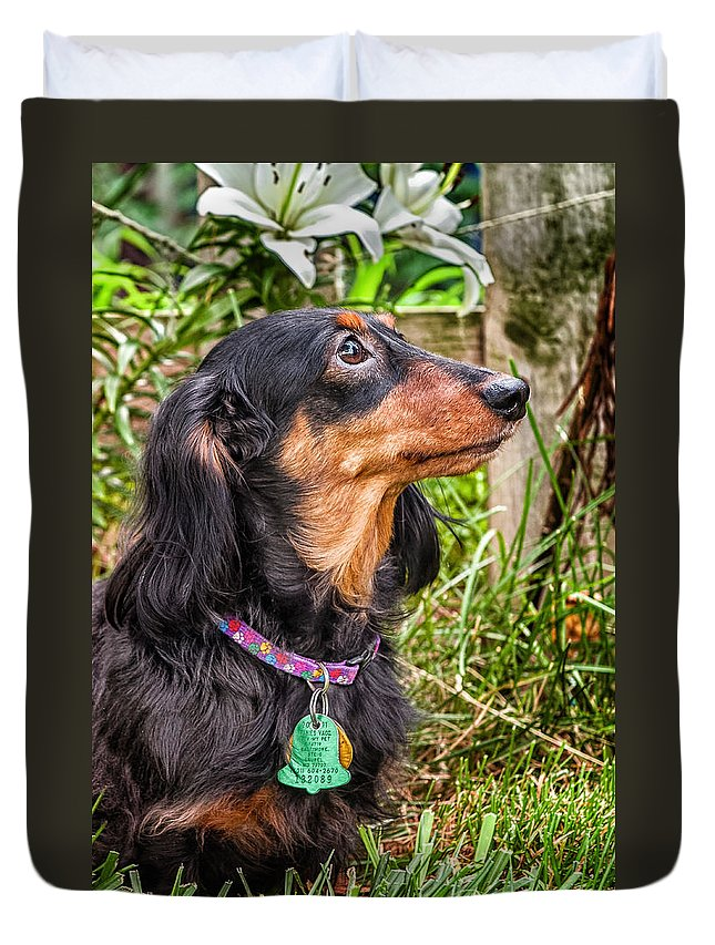 Mammals Duvet Cover featuring the photograph Katie by Jim Thompson