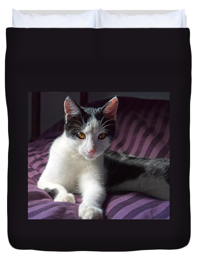 Beautiful Duvet Cover featuring the photograph Kitten by Melinda Fawver