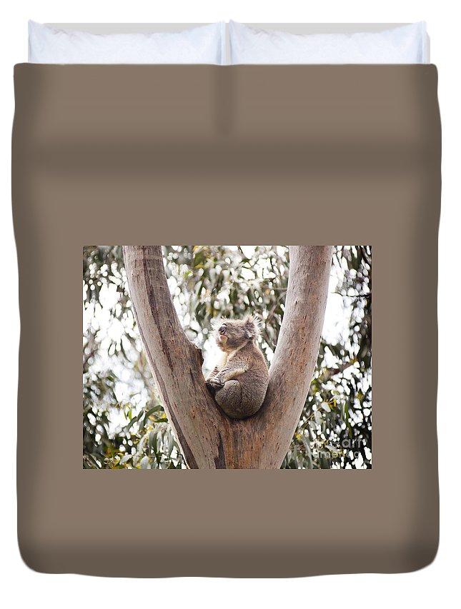 Australia Duvet Cover featuring the photograph Koala by Tim Hester