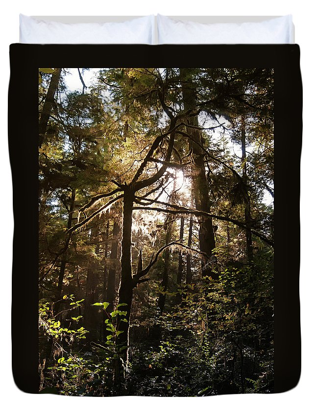Rain Forest Duvet Cover featuring the photograph Light In The Forest by Allan Van Gasbeck