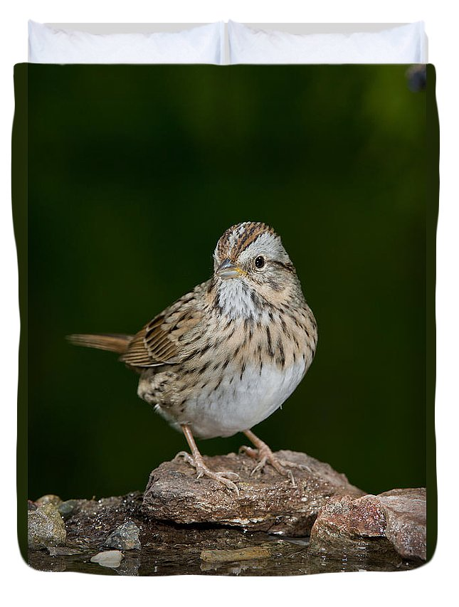 Lincoln's Sparrow Duvet Cover featuring the photograph Lincoln Sparrow by Anthony Mercieca