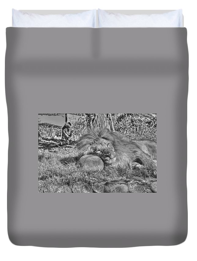 Animals Duvet Cover featuring the photograph Lion In Repose by SC Heffner