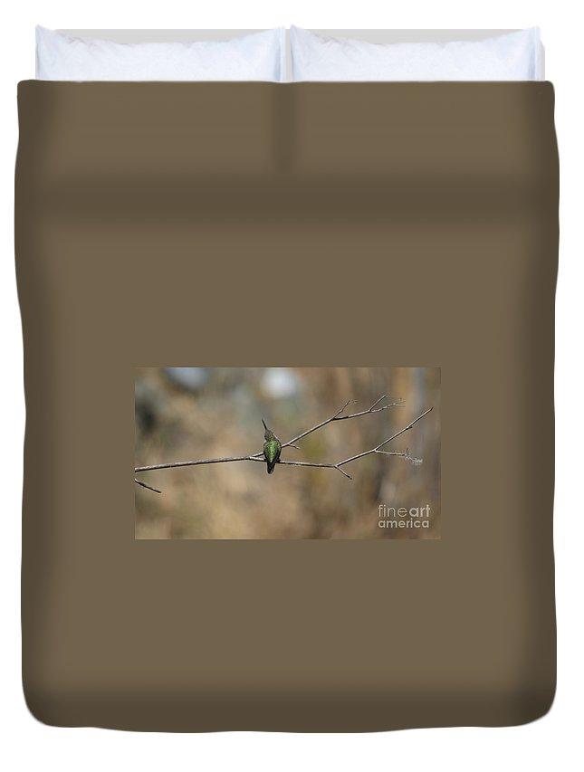 Hummingbird Duvet Cover featuring the photograph Lone Hummingbird by Jacklyn Duryea Fraizer