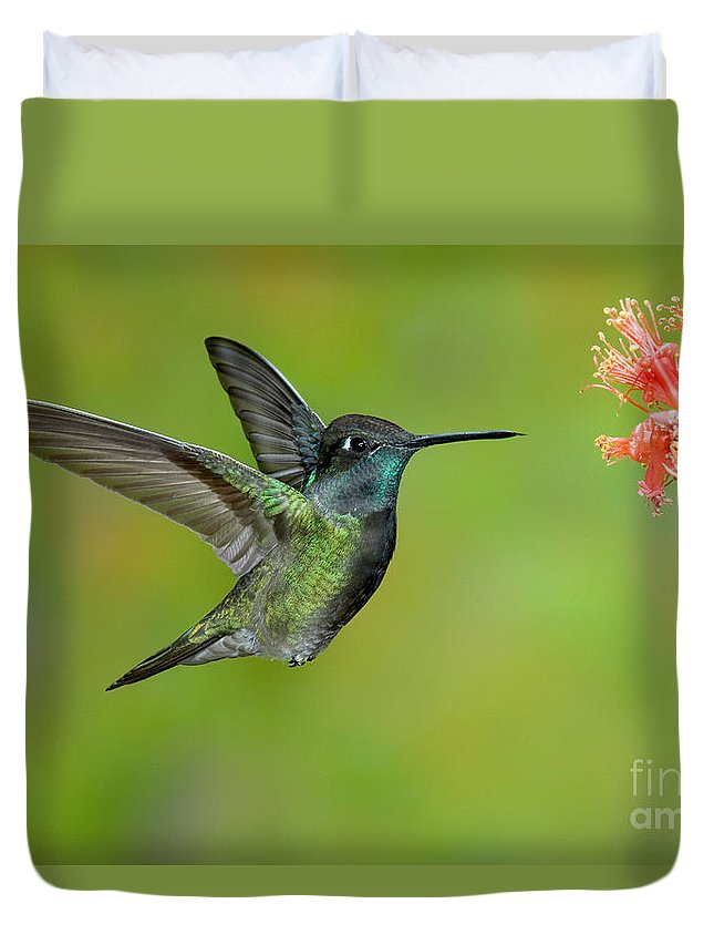 Fauna Duvet Cover featuring the photograph Magnificent Hummingbird by Anthony Mercieca