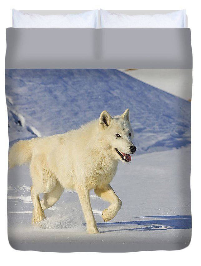 Wolf Duvet Cover featuring the photograph Majestic by Jack Milchanowski