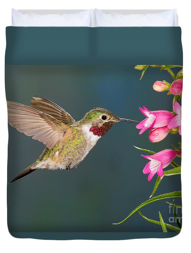 Fauna Duvet Cover featuring the photograph Male Broad-tailed Hummingbird by Anthony Mercieca