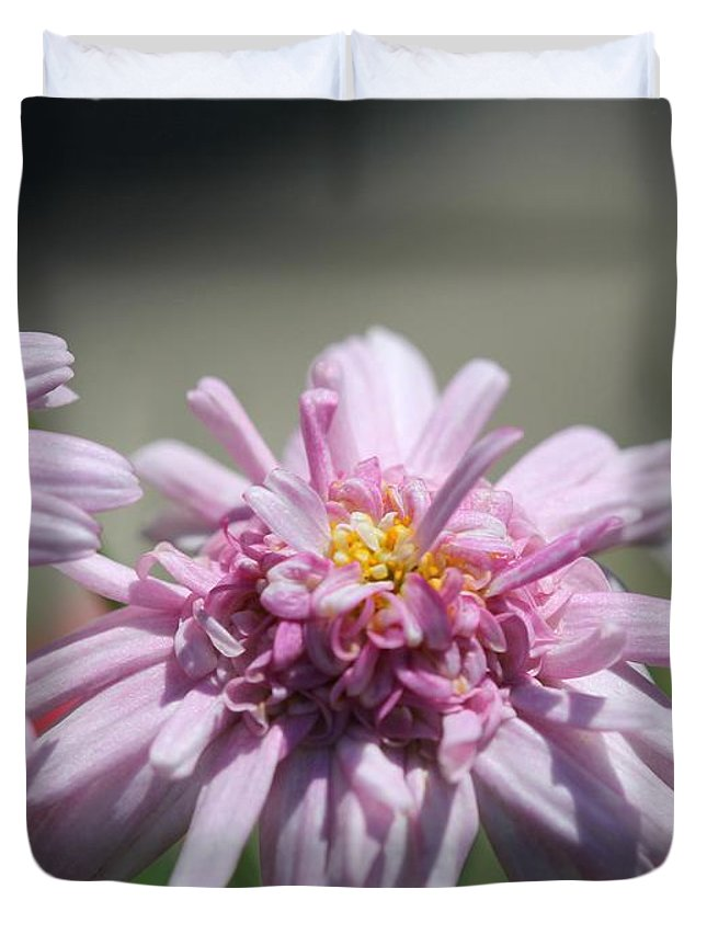 Mccombie Duvet Cover featuring the photograph Marguerite Daisy Named Double Pink by J McCombie