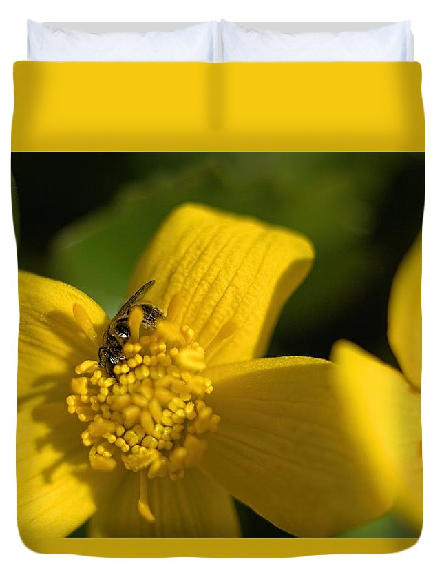 Marigold Duvet Cover featuring the photograph Marsh Marigold by Bonfire Photography