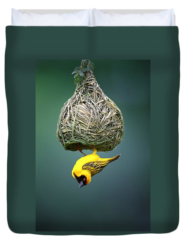 Africa Duvet Cover featuring the photograph Masked Weaver At Nest by Johan Swanepoel