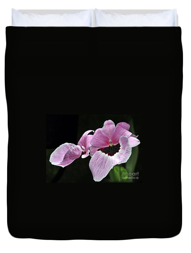 Orchid Duvet Cover featuring the photograph Miltoniopsis Alger by Terri Winkler