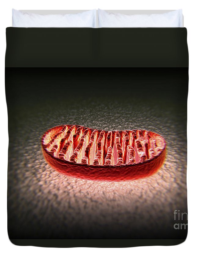 Anatomical Model Duvet Cover featuring the photograph Mitochondria Cut by Science Picture Co