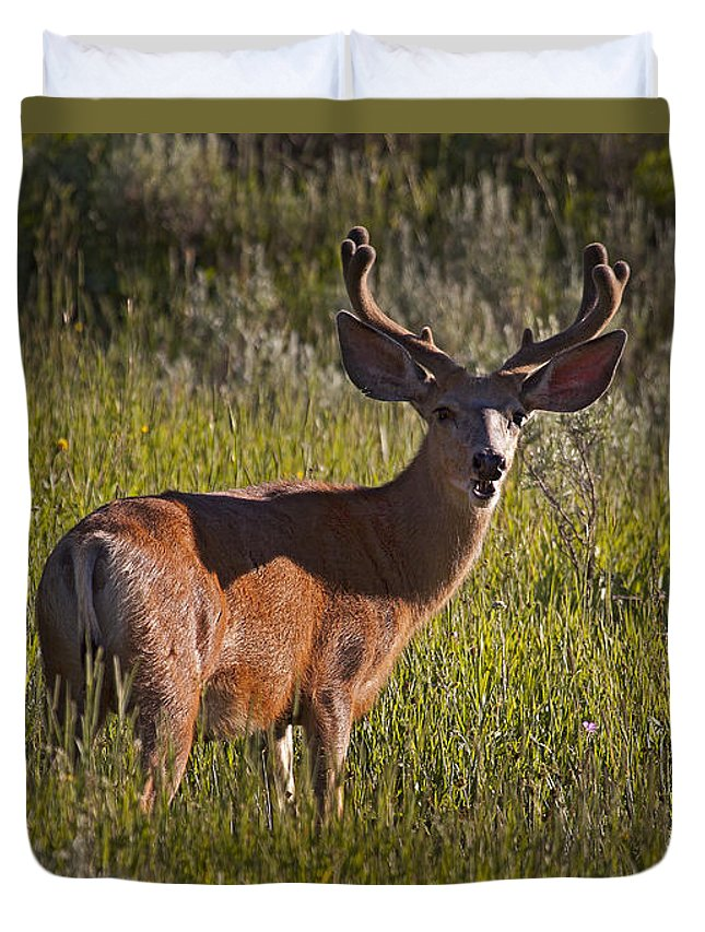Deer Duvet Cover featuring the photograph Mule Deer Buck In Velvet  #2164 by J L Woody Wooden