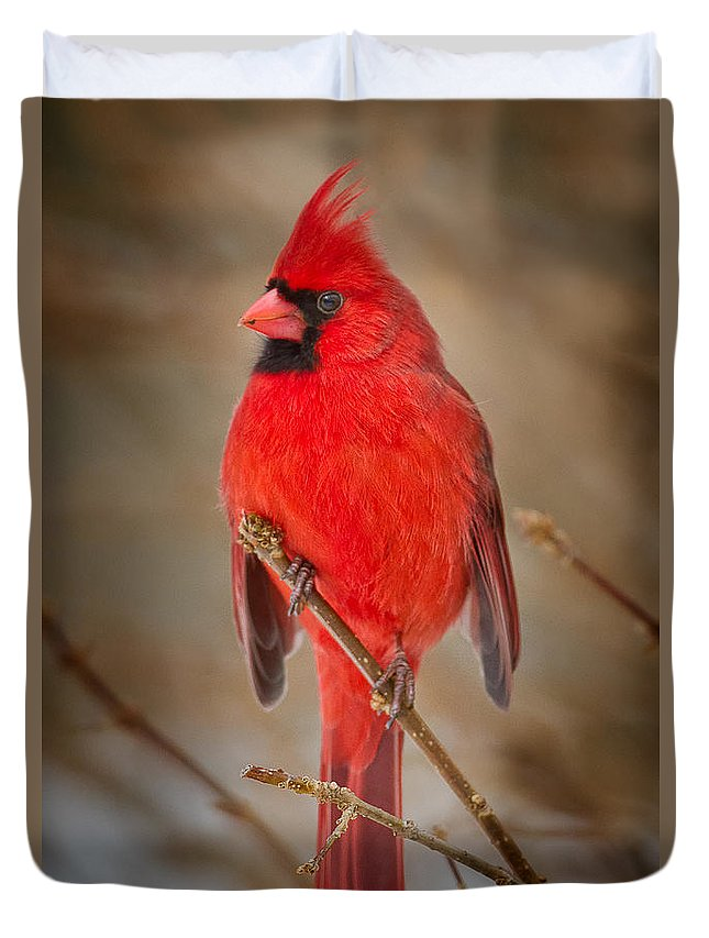 Cardinal Duvet Covers