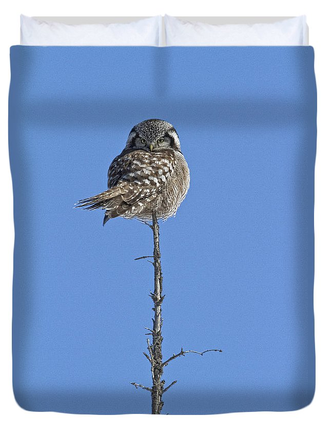 Light Duvet Cover featuring the photograph Northern Hawk Owl by Robert Postma