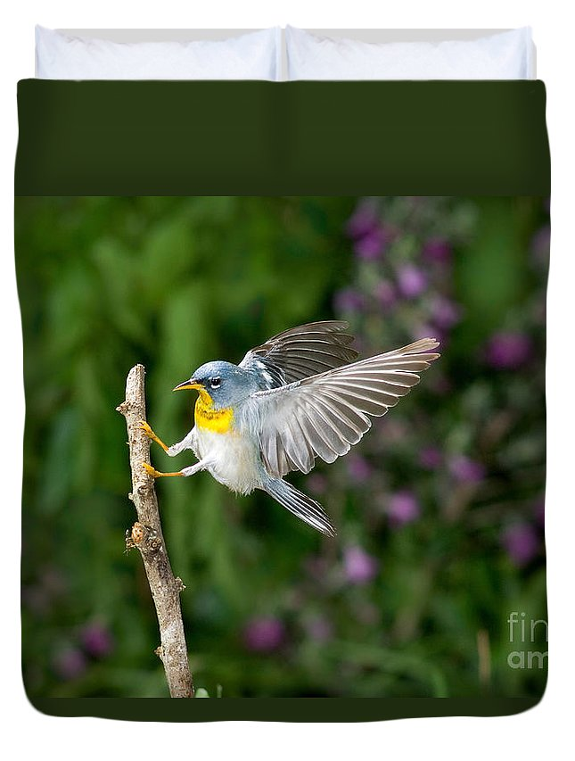 Northern Parula Duvet Cover featuring the photograph Northern Parula Warbler by Anthony Mercieca