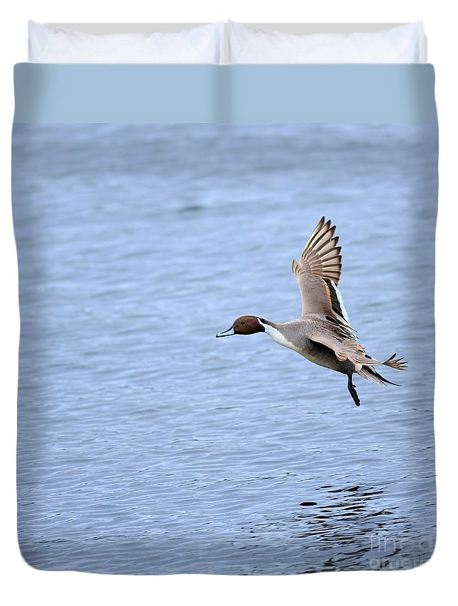 Pintail Duvet Cover featuring the photograph Northern Pintail Duck by Louise Heusinkveld